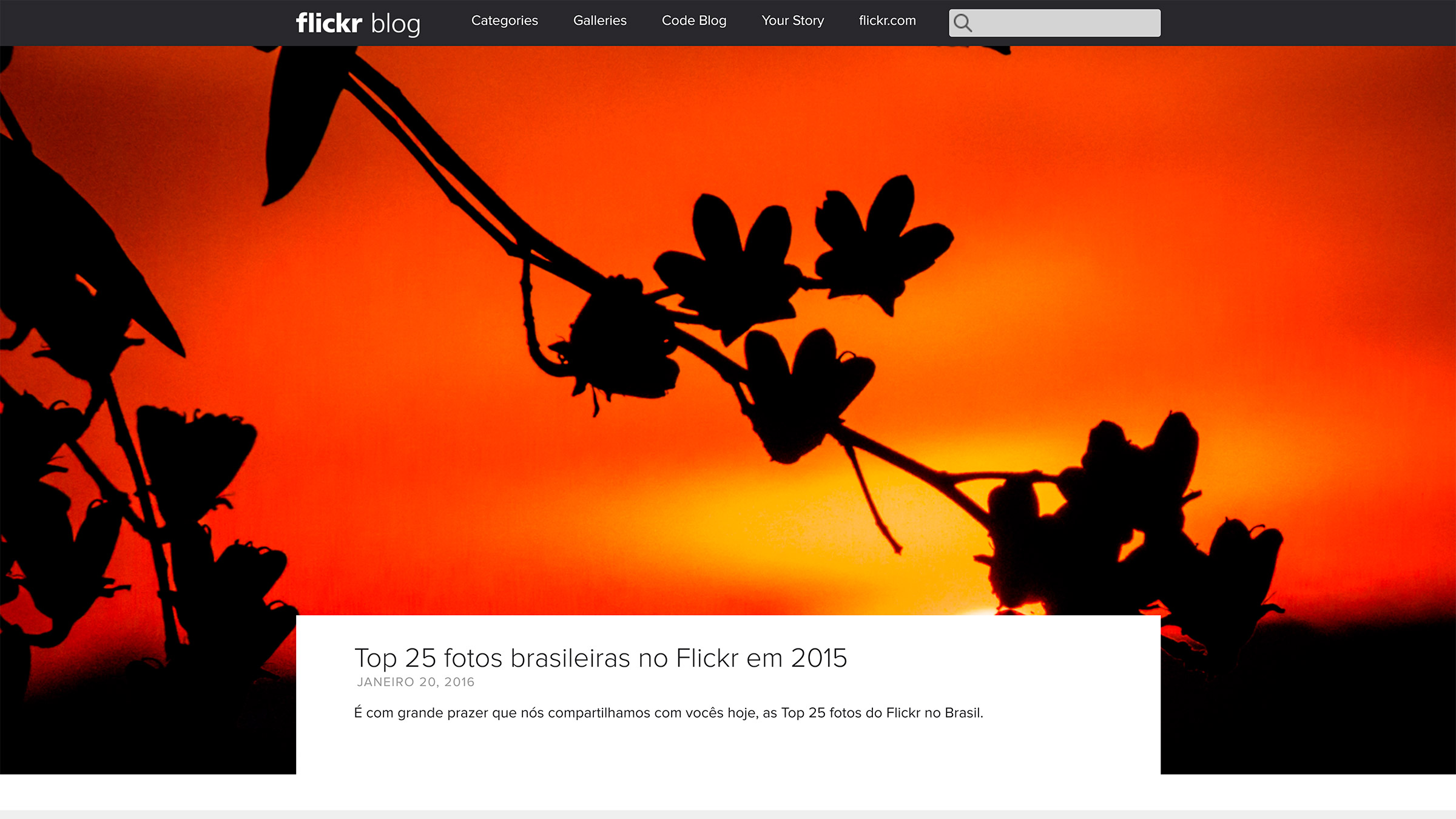 flickr blog site construido com o wordpress